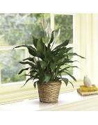 Tutte le piante per il tuo appartamento