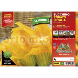 Zucchino da fiore-plateau