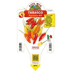 Peperoncino tabasco - vaso 14