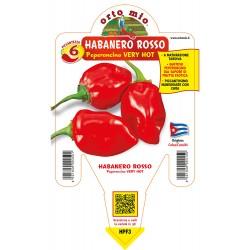Peperoncino Habanero rosso...
