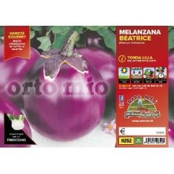 Melanzana tonda lilla-v10