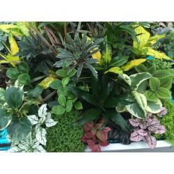 pianta mix v8