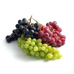 Vite-pianta dell'uva vaso 18