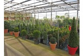 La Serra Fiorita Garden Center